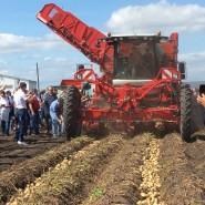 Всероссийский день поля для Картофельников! Начало положено!