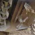 Молотквые и вращающиеся ножи _ луковая копалка WR 300 Аза Лифт ( nht[hzlysq kerjdsq rjgfntkmтрехрядный луковый копатель)