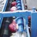 ТК 150 В капустоуборочный комбайн Аза Лифт- уборка кочанов на переработку (не на хранение). Ародирект Ародирект